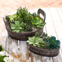 Small Succulent Plant Arrangement,