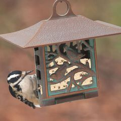 Nuthatch Suet Feeder,
