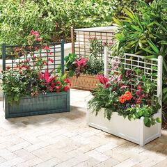 Flower Box With Trellis,