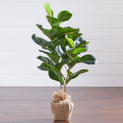 3' Fiddle leaf Fig Tree with Burlap,