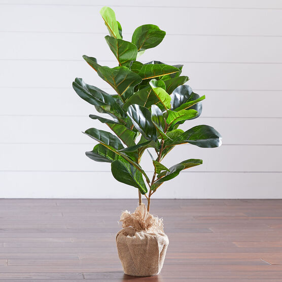 3' Fiddle leaf Fig Tree with Burlap, GREEN