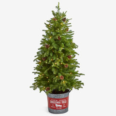 "54"" Pre-Lit Tree in Metal Bucket,"