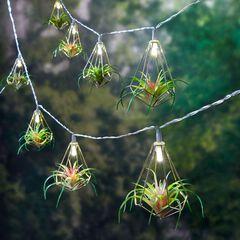 Succulent String Lights,