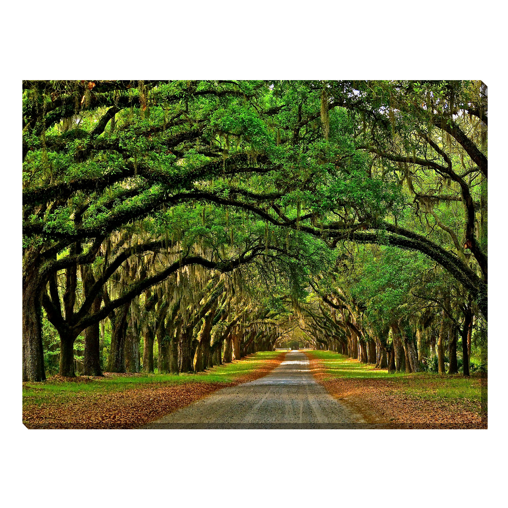 Avenue of The Oaks Outdoor Canvas Art, MULTI