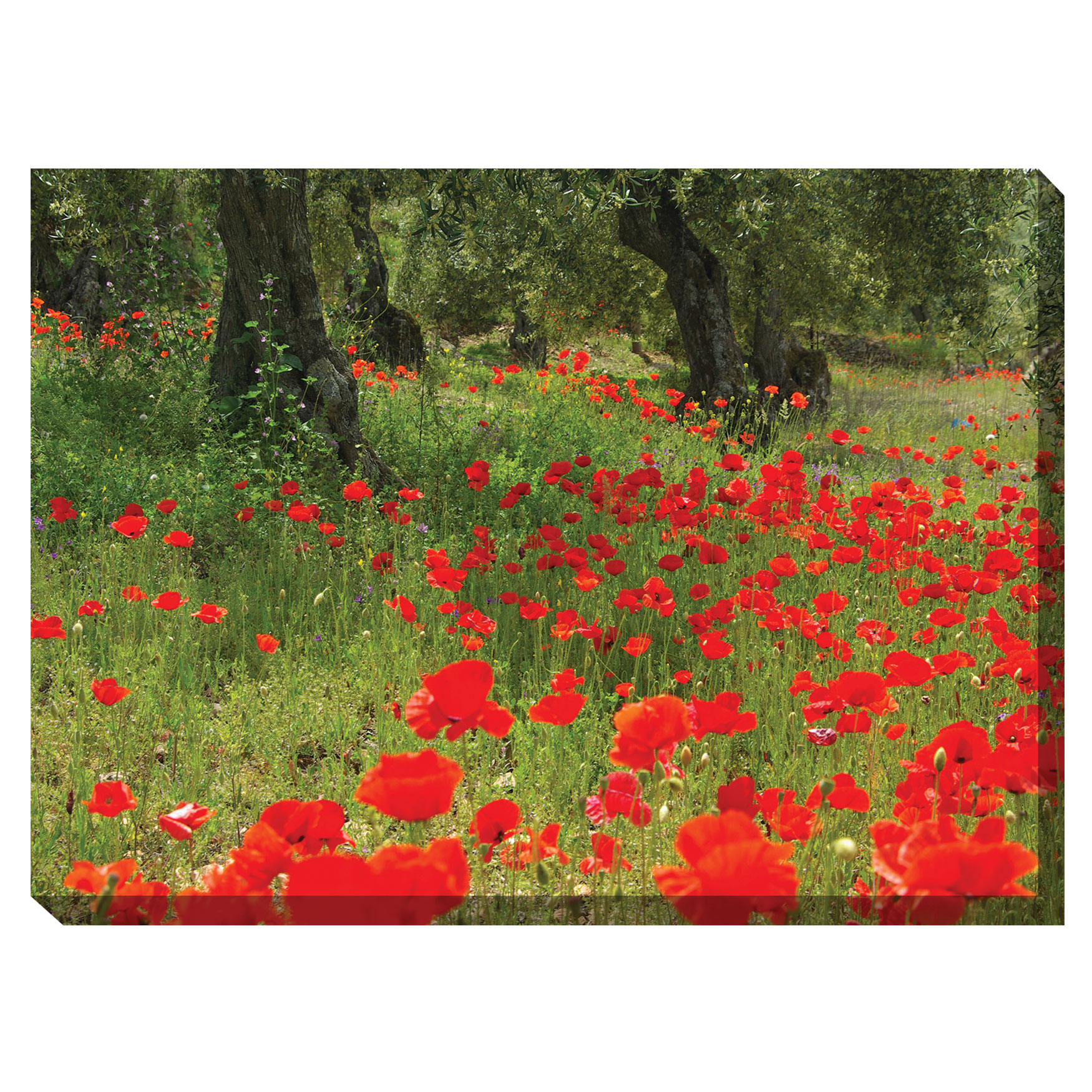 The Olive Grove Outdoor Canvas Art, MULTI