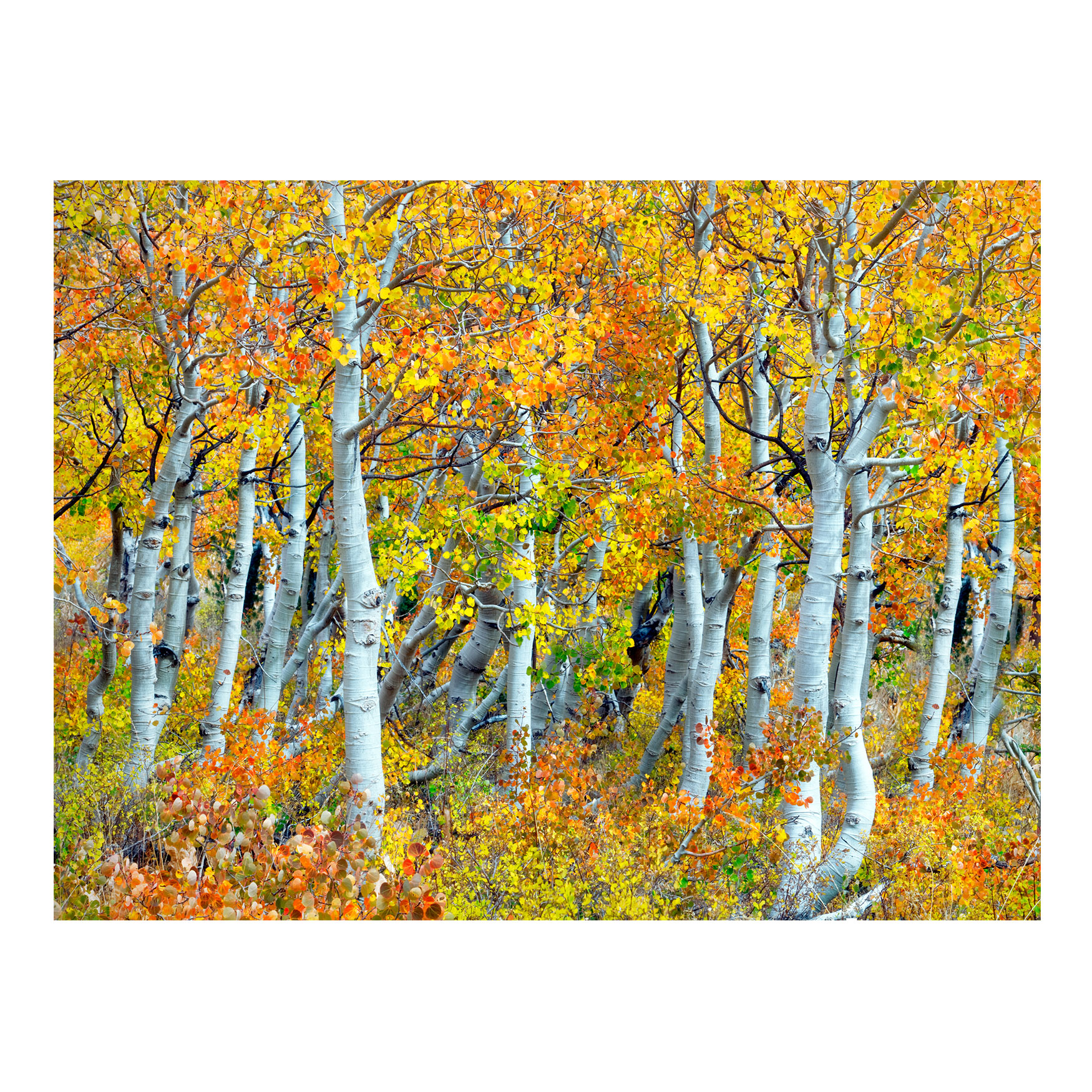 All Weather All Season Outdoor Canvas Art, MULTI