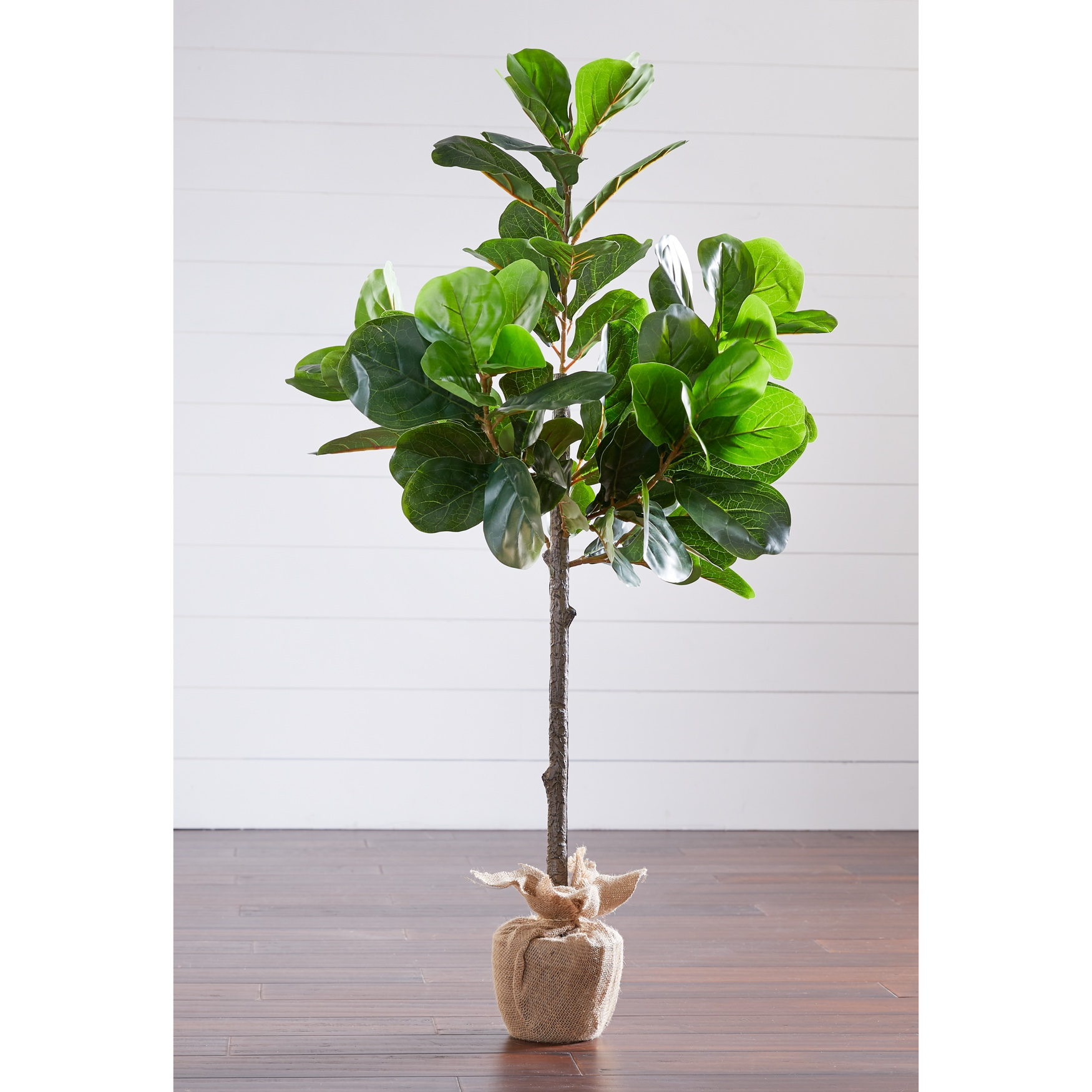 4¼' Fiddle Leaf Fig Tree with Burlap Wrap, GREEN